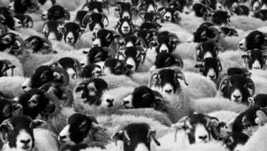 Einschlafstörungen - Wenn das Schafe zählen nicht mehr hilft.