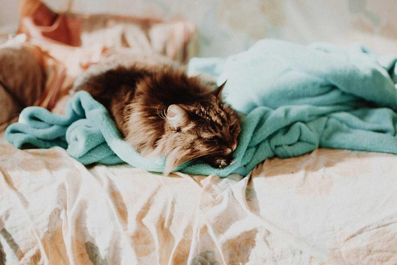 Luftfeuchtigkeit Schlafzimmer - senken oder erhöhen, optimale Werte